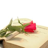 Liebesgedichte & Liebessprüche